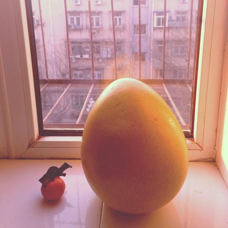 The mandarin and the palmello plot their escape.